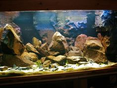 African cichlid tank. Lots of rocks in here. I like it except for the large rock balanced on the left side. Doesn't look right perched up there.