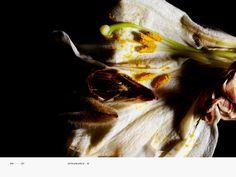 Encyclopedia of Flowers-植物図鑑 | WORKS | HARA DESIGN INSTITUTE