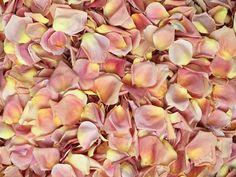 Congelare i petali di rosa essiccati Peach di RosePetalsEverywhere