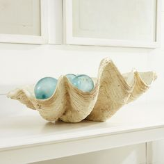Giant Clam Bowl