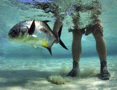Roatan Honduras: Epic Permit, Tarpon & Bonefish