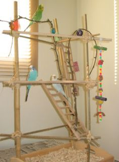 Pets on pinterest parrot perch play gym and parrot stand for How to build a bird stand