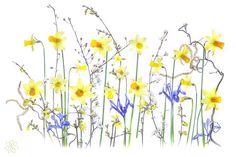 Spring Reverie by Jacky Parker on 500px
