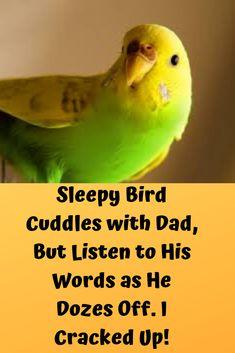 Sleepy Bird Cuddles with Dad, But Listen to His Words as He Dozes Off. Activity List, List Of Activities, Parakeets, Parrots, Most Favorite, Beautiful Birds, Pet Birds, Cuddling, Cute Cats