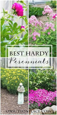 Perennials With just a little research and knowledge of your planting zone you can achieve a beautiful, healthy garden in no time. Here are 5 great perennials that will get you started or be great additions to existing plants. Hardy Perennials, Hardy Plants, Flowers Perennials, Planting Flowers, Flower Gardening, Growing Flowers, Garden Shrubs, Lawn And Garden, Garden Landscaping