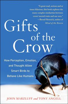 """In the Library.  A wonderful book on the smartest of birds, the Corvidae family of crows, magpies, jays, and ravens.  These work together, especially mating pairs an do such """"delinquent"""" things as pulling the tails of larger and more powerful animals from dogs, to meerkats to porcupines."""