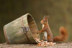 Edwin gagne la confiance des animaux de la forêt pour les photographier dans leur intimité