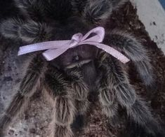 submission: My lazy queen-like Tarantula, Helga. She has many fans that love her and she's a spoiled princess. AS: cute! She's beautiful and I love her Creepy Cute, Exotic Pets, Bugs, Horror, Cute Animals, Kitty, Kawaii, Spiders, Aesthetics