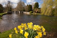Ashford in the Water - sheepwash bridge and the river Wye Peak District, Derbyshire, Summer Months, Daffodils, Wild Flowers, England, Country Roads, River, Sheep