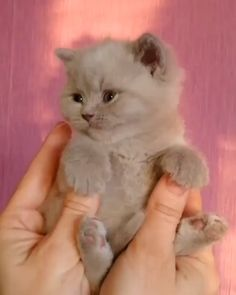 Baby animals with mom kittens ideas Kittens Cutest, Cats And Kittens, Cute Cats, Kitten Gif, Cat Gif, Kitten Videos, Baby Puppies, Cute Puppies, Baby Animals