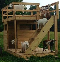 DIY Rooftop Terrace Goat House... #goats #homestead #homesteading