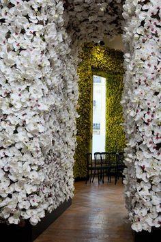murs d'orchidées!