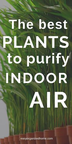 The best plants for houses, apartments and offices that are low maintenance and . : The best plants for houses, apartments and offices that are low maintenance and purify the air. The best air detox houseplants.