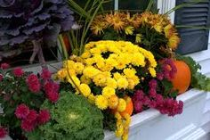 Image result for fall window boxes