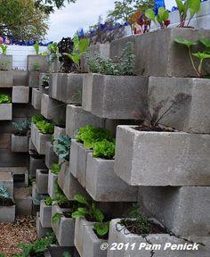 Edible wall! Cinderblock wall vegetable garden