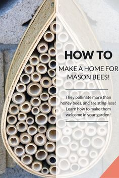 How to make a home for stingless super-pollinator Mason Bees! DIY B&B for the Bees