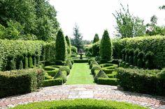 plan de jardin avec plantes topiaires