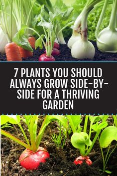 "Grow These Plants Side-By-Side For A Thriving Garden. Grow These Plants Side-By-Side For A Thriving Garden. Strategically growing certain plants side-by-side is called companion planting, and it's a way to help all your veggies ""graduate"" to harvest."