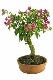 Html, Herbs, Plants, Herb, Plant, Planets, Medicinal Plants