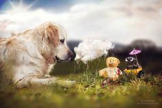 A fotógrafaGabi Stickler tem registrado há anos seu cachorro Mali, da raçaGolden Retriever. Em uma grande extensão de imagens perfeitas, a amizade entre - Amizade entre Golden Retriever e seu ursinho rende belíssimo ensaio fotográfico
