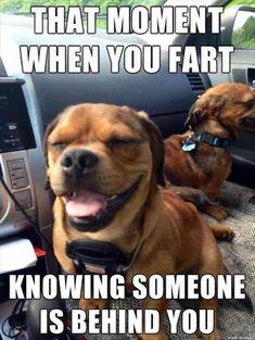 Funny Animal Photos, Funny Animal Jokes, Funny Dog Memes, Really Funny Memes, Funny Animal Videos, Funny Animal Pictures, Cute Funny Animals, Funny Cute, Funny Photos