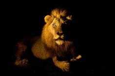 Animal Photography by Hennie van Heerden