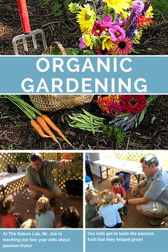 Every week, our classrooms get to spend some time in The Nature Lab with Mr. Joe where they can plant and grow organic fruits and vegetables! Carmel Mountain, Organic Fruits And Vegetables, Grow Organic, Our Kids, Organic Gardening, San Diego, Lab, Preschool, Teaching