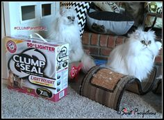 Sweet Purrfections - Are you ready for company during the holidays? Keep your home odor-free with ARM & HAMMER™ cat litter. Dog Insurance, Louis Vuitton Damier, Christmas Holidays, Cute Animals, Pets, Arm, Pet Photos, Sweet, Pattern
