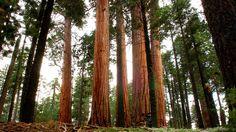 Redwood National Park in CA