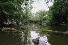 https://flic.kr/p/hR1wqR   In den Rheinauen   ... und wo ist das Krokodil?