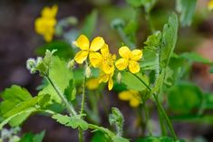 Magazinzahrada.cz - Fast Metabolism, Korn, Natural Cosmetics, Medicinal Plants, Herbalism, Medicine, Health Fitness, Gardens, Homemade