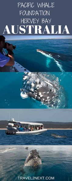 Pacific Whale Foundation whale watching tour in Hervey Bay Queensland, Australia, the whale-watching capital of the world.