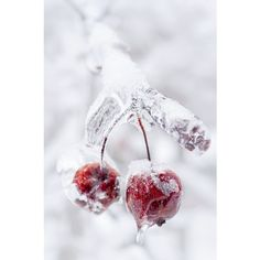 Frozen crab apples on icy branch ❤ liked on Polyvore featuring backgrounds, christmas, winter, frames and embellishment