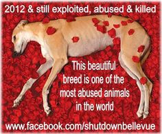 Animal Rights Images | Crazy Gallery