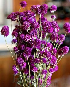 Free Dried Flower Decor DIY Ideas for you Home Decorations.