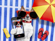 Neuer Gag on-the-line: #dogselfie  Auch Hund kann Technik! #Urlaub #Sommer #Selfie