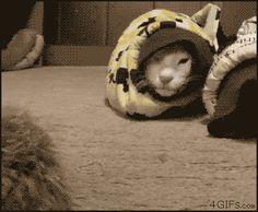 Tumblr: darylfranz:    スネークキャットの摩訶不思議な生態に迫る - ぁゃιぃ(゚ー゚)NEWS 2nd