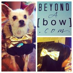 Check out @Beyond a Bow at beyondabow.com