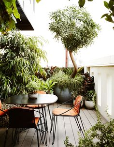 An urban oasis. A roof top garden in the city of Melbourne, Australia.