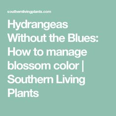 Hydrangeas Without the Blues: How to manage blossom color | Southern Living Plants