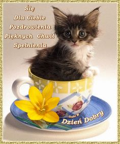 Ślę Pozdrowienia Pięknych Chwil Spełnienia Cheerleading, Kitten Wallpaper, Beautiful Gif, Good Morning, Cute Pictures, Happy Birthday, Humor, Cool Stuff, Funny