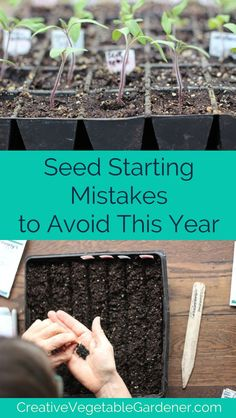 Gardening If you love the excitement of growing your own plants at home, but have mixed success, you might be making some of these common mistakes of seed starting. Gardening For Beginners, Gardening Tips, Hydroponic Gardening, Indoor Gardening, Gardening Services, Gardening Quotes, Flower Gardening, Garden Pests, Garden Insects