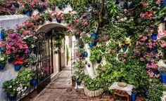 Los patios / Córdoba