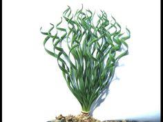 Gethyllis Fruit -- Small, Medium, Large Species Bulb Flowers, Herbs, Fruit, Youtube, Medium, Plant, Herb, Youtubers, Youtube Movies