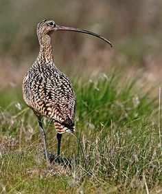 Click to Close