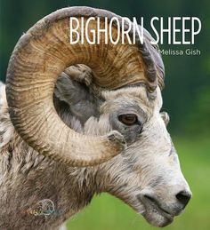 Bighorn sheep, Melissa Gish, 9781608185641, 11/19,15