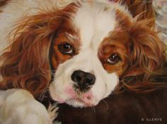 jeanne illenye looking after them...: Cavalier King Charles Spaniels - Henry