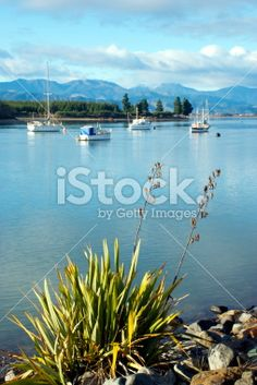 Looking up the Mapua Estuary, Nelson, New Zealand. Abel Tasman National Park, Turquoise Water, South Island, Native Plants, Looking Up, New Zealand, Flora, National Parks, Royalty Free Stock Photos