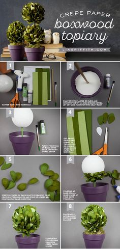 Create a gorgeous set of boxwood topiaries using foam balls