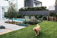 Relaxed summer vibes at one of our Dover Heights projects. We used recycled hardwood and deco granite paired with mixed coastal planting to create an unpretentious garden for our clients.